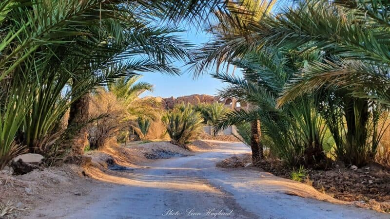 Palm trees in Garmeh Iran